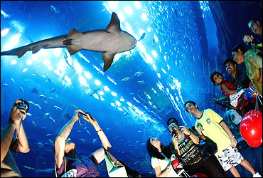 Aquarium at The Dubai Mall.