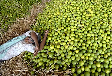 A labourer takes rest besides sweet lime at a wholesale market in Hyderabad.