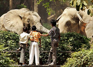 Children admire an African (L) and Indian elephant at New Delhi's zoo.