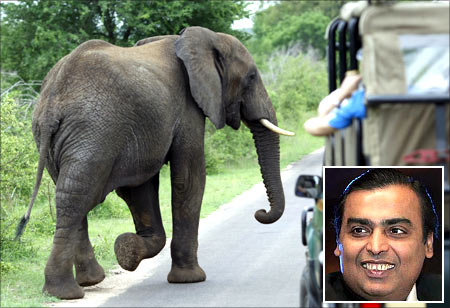 An elephant walks past a car load of tourists in South Africa's Kruger National Park. Mukesh Ambani (inset).