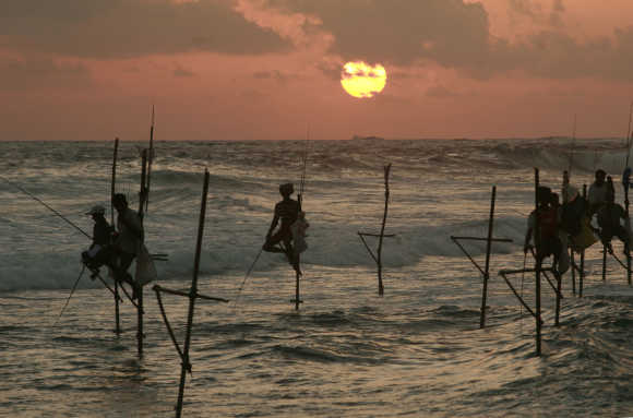 Fishermen sit on sticks while fishing in the traditional way in Koggala, south of Colombo.