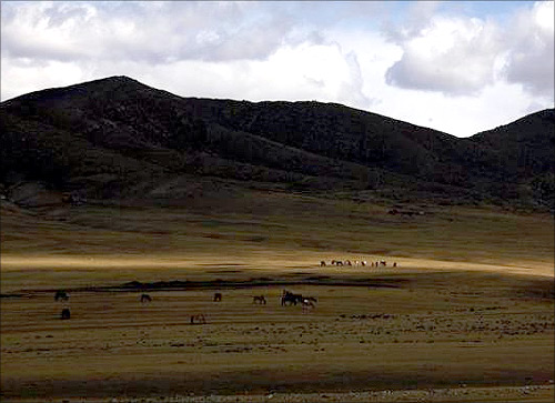 The quest for gold in Mongolia