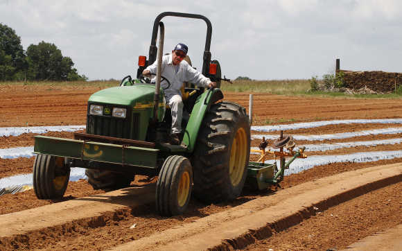Litto Sanchez sets up rows for the planting of tomatoes in Oneonta, Alabama.