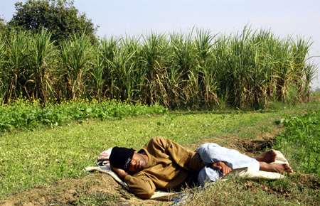 A farmer sleeps next to a sugarcane field in the village of Dumchhedi in Punjab.