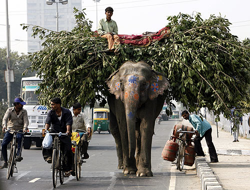 An elephant loaded with tree branches walks down a busy road in New Delhi.