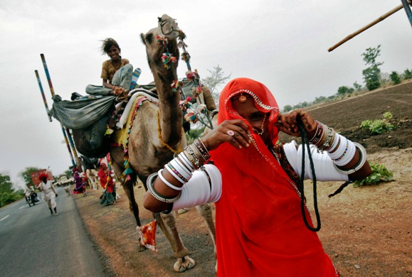 A nomadic woman from Rajasthan walks near a camel carrying her belongings.