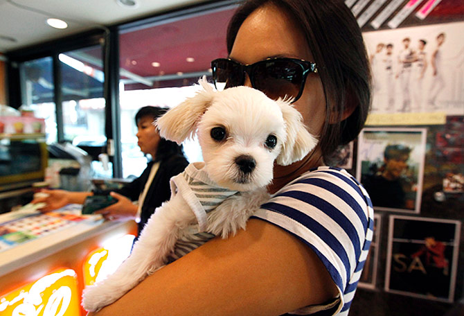 A woman carries her puppy inside a store on the trendy Garosugil.