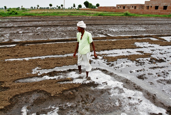A farmer stands on a field as he works to spread canal water at Vechiya village in Gujarat.