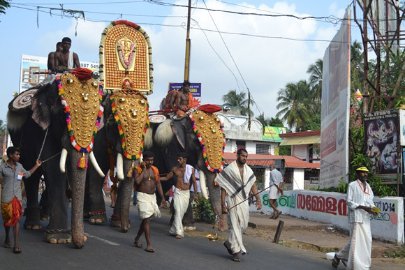 Elephants walk on the road during a temple festival.