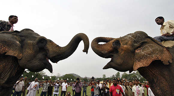 Two elephants fight during a traditional rural sports festival in Boko, Assam, India.