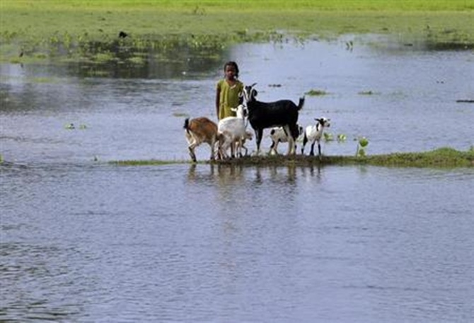 A flood-affected girl stands with goats on the banks of Kosi river at Kusaha village in Purniya district in Bihar.