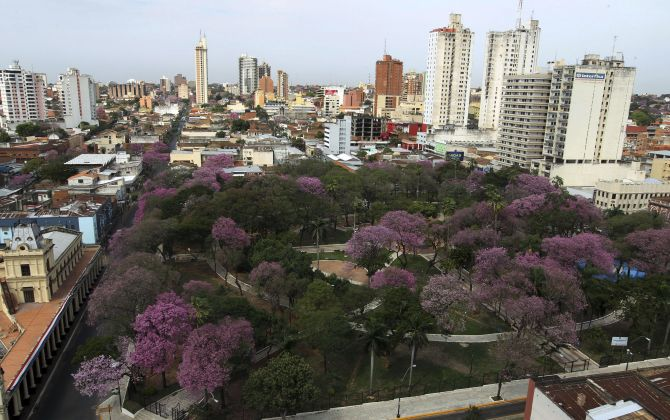 Lapacho trees, Paraguay's national tree, are seen in bloom against the backdrop of the city in Asuncion.