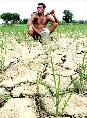 A drought-hit farmer sits in his paddy field on the outskirts of Ambala, Haryana.