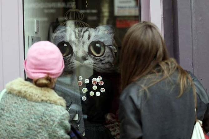 Coffee lovers can enjoy kitty cuddles at London's first cat cafe