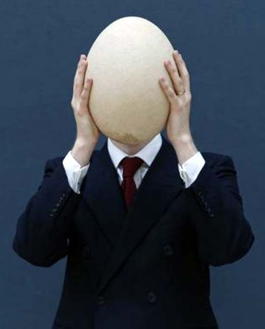 Sub-fossilized elephant bird egg.