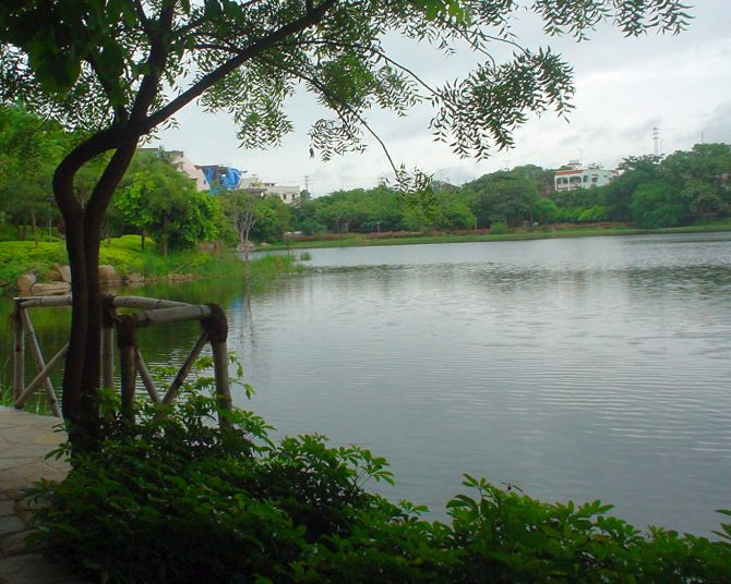 View of Lotus Pond.