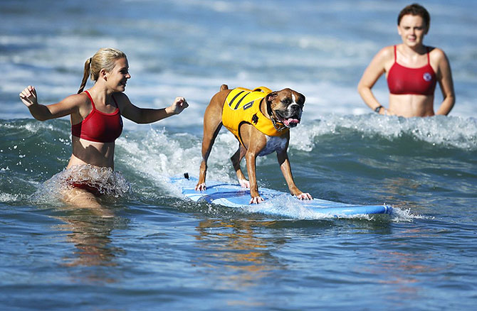 A dog participates in a surfing competition.