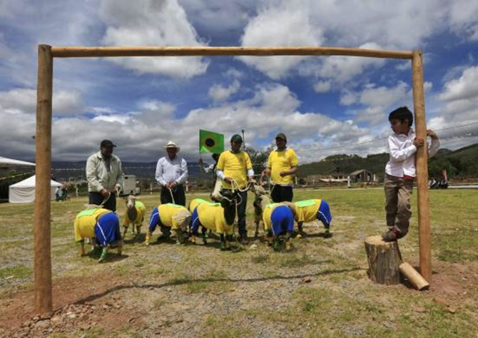 Farmers wait with their sheep, dressed with jerseys in the colors of the Brazilian national soccer team, during an exhibition in Nobsa, Colombia.