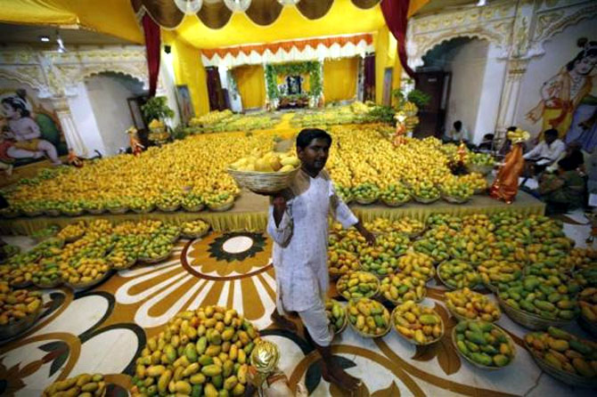A priest carries a basket of mangoes to distribute among devotees after it was offered to Lord Krishna inside a temple during a mango festival in Ahmedabad.