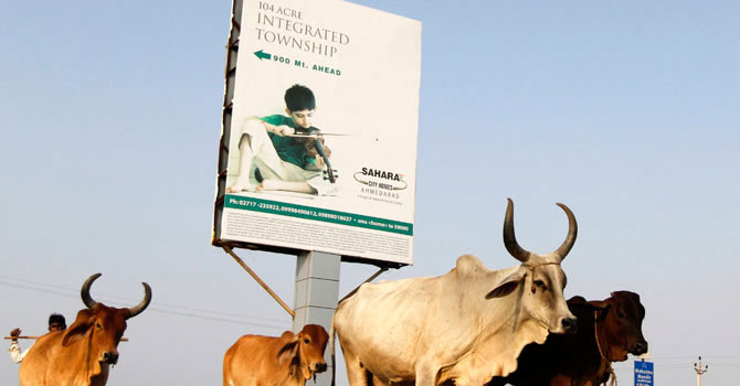 Cattle move past a Sahara advertisement board installed at a township under construction, owned by Sahara group on the outskirts of the western Indian city of Ahmedabad