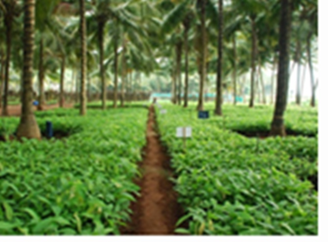 Mondelez India S Successful Cocoa Story Rediff Com Business