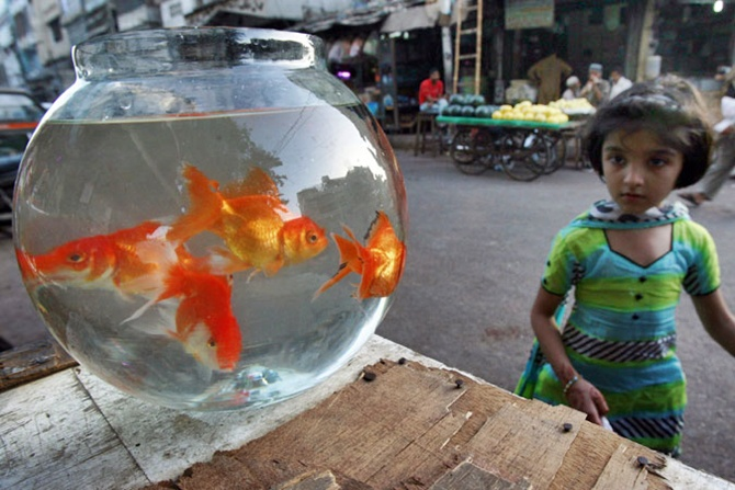 A girl looks at goldfish for sale at a sidewalk stand in Karachi.