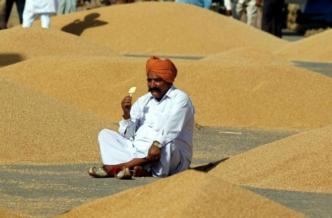 Record wheat output seen, arranging storage a worry