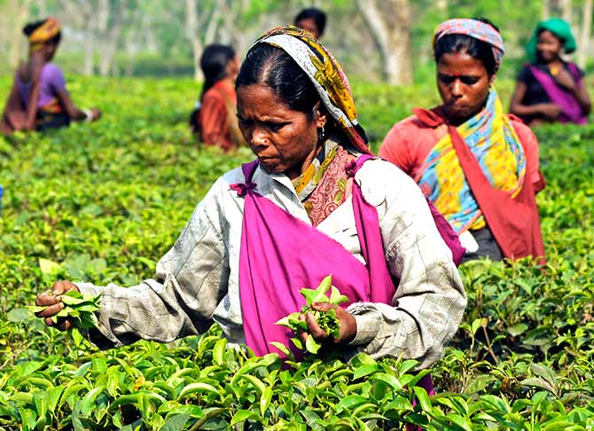 Tea estate workers