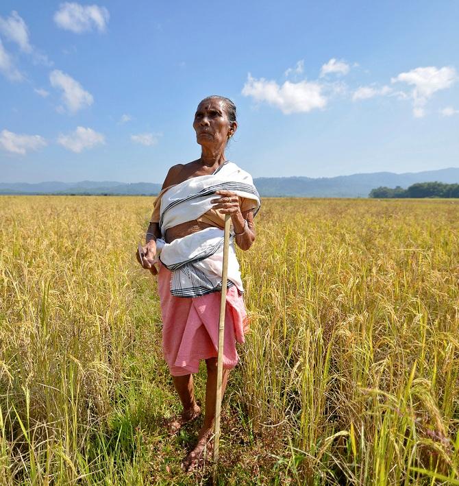 The farmer in the farm loan waiver