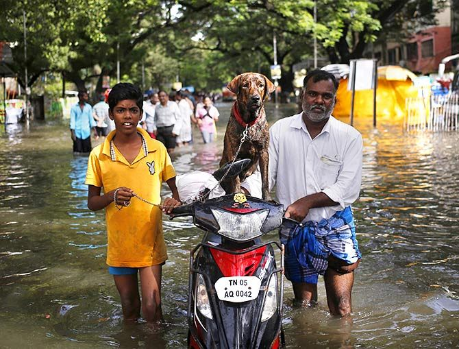 Residents along with a dog evacuate a locality as they wade through a flooded street in Chennai, India, December 3, 2015. Photo: Anindito Mukherjee/Reuters