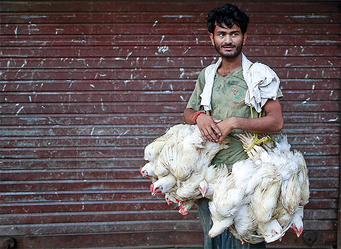 Poultry firms, farmers hit due to culling
