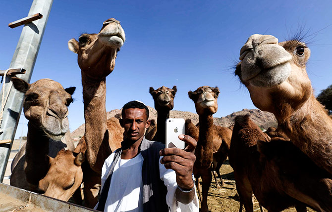 A man takes a selfie with camels at a farm in Taif, Saudi Arabia, November 1, 2014. Photograph: Mohamed Alhwaity/Reuters
