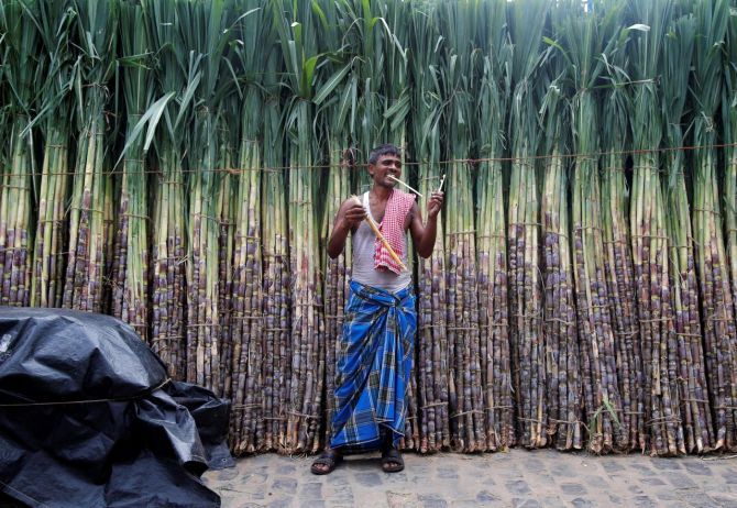 Sugarcane economy sets tone for UP's Lok Sabha poll