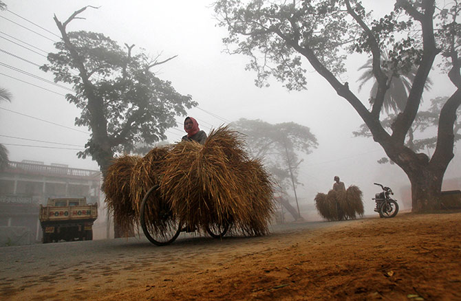 Straw being transported in Agartala, Tripura. Photograph: Jayanta Dey/Reuters.