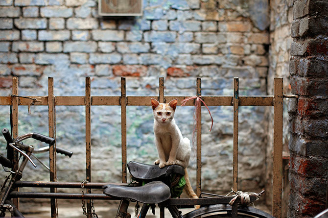 A handy perch for an alley cat in the old quarters of Delhi. Photograph: Mansi Thapliyal/Reuters.