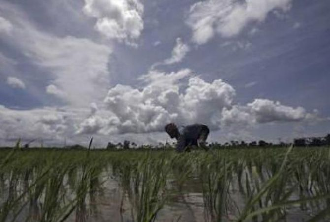 Normal monsoon will contain food price pressures: RBI