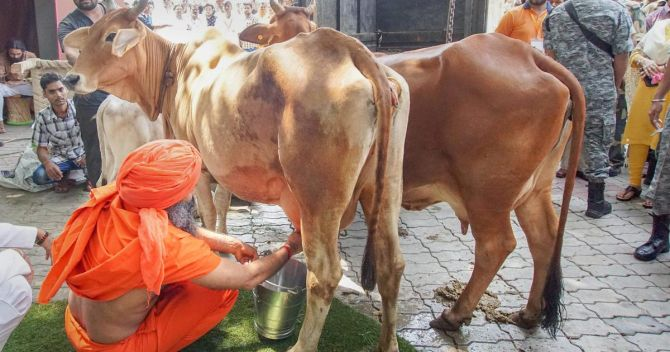 Why India's milk production has grown at over 6%