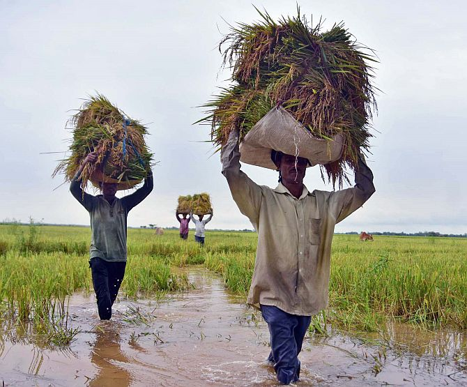 Govt hikes MSP for paddy, okays Rs 50k cr for MSMEs