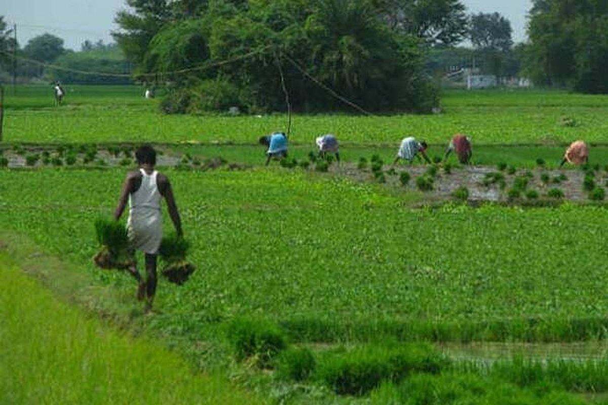 Agri loans not entitled for interest waiver, says govt