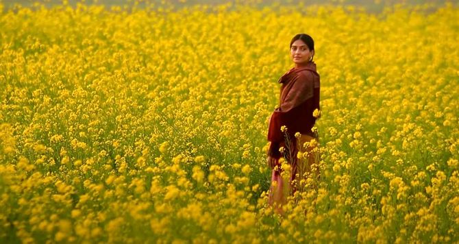 When Bollywood danced in a field of gold