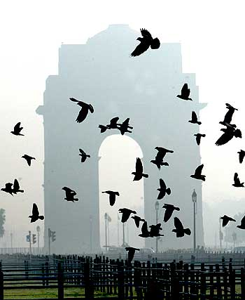 Doves fly near India Gate, on a cold foggy morning in New Delhi