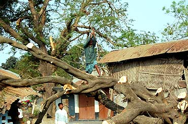 A man tries to hack an uprooted tree