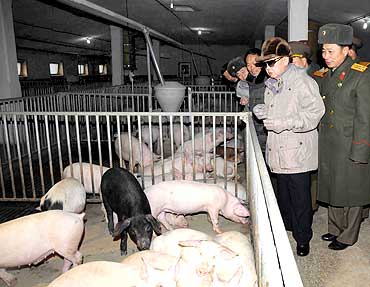 Kim Jong-il visits a pig farm at an undisclosed place in North Korea