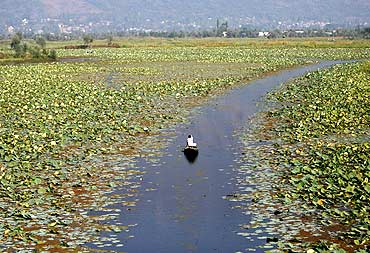 A Kashmiri man rows a boat through the polluted waters of Dal Lake in Srinagar