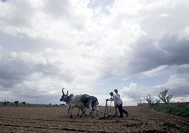 Farmers plough their field as the monsoon clouds cover the sky in Gondal town, Ahmedabad