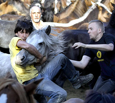 Revellers try to hold on to a wild horse