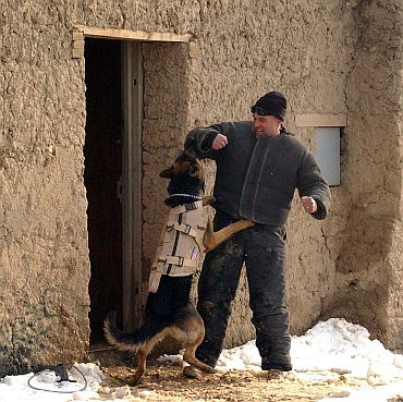 Over 500 dogs in service in Pakistan, Afghanistan