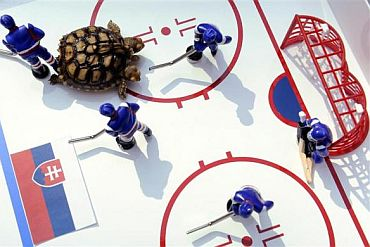 A two-headed African spurred tortoise named Magdalena moves around a small-scale model of an ice hockey rink, predicting hosts Slovakia would beat Slovenia in the opening match at the upcoming ice hockey World Championship, at Magdalena's hometown in Zilina on April 28. Following in the 'footsteps' of Paul the oracle octopus, a rare two-headed tortoise has embarked on a new career in predicting results at the upcoming ice hockey World Championship in Slovakia