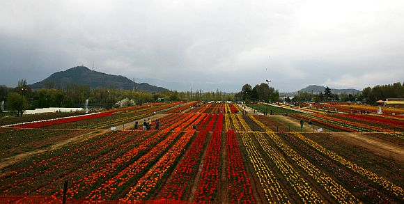 The massive response that the tulip garden has attracted is egging on efforts to expand its area from 12 hectares to 35 hectares