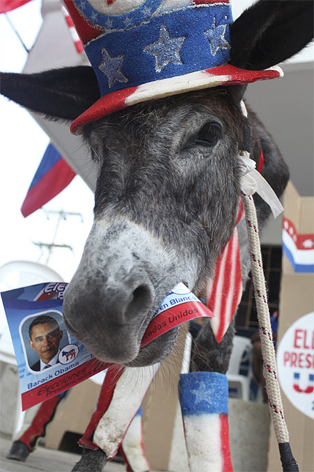 A donkey named Demo is pictured during a symbolic election organised by US President Barack Obama's followers